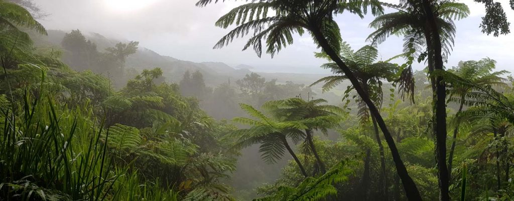 Daintree Walks and Lookouts