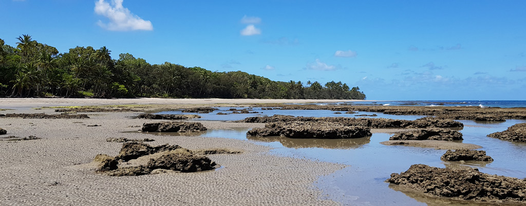 Coconut-Beach-Daintree